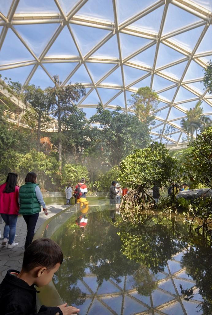 温室内的红树林潮汐池